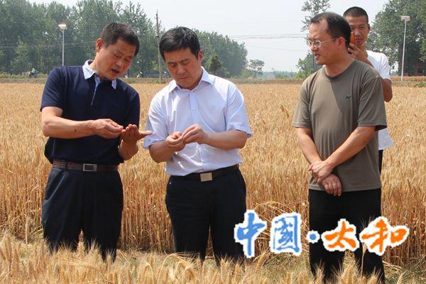 县委书记杨波到胡总镇督导检查午季秸秆禁烧工作
