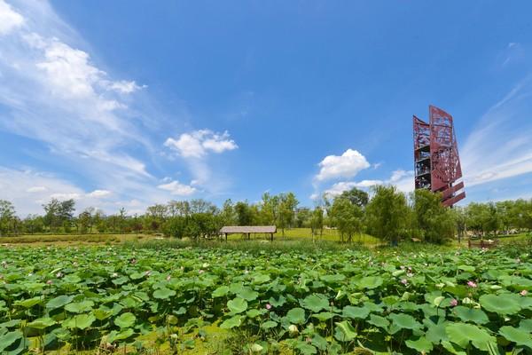 湿地公园-荷塘清趣.jpg
