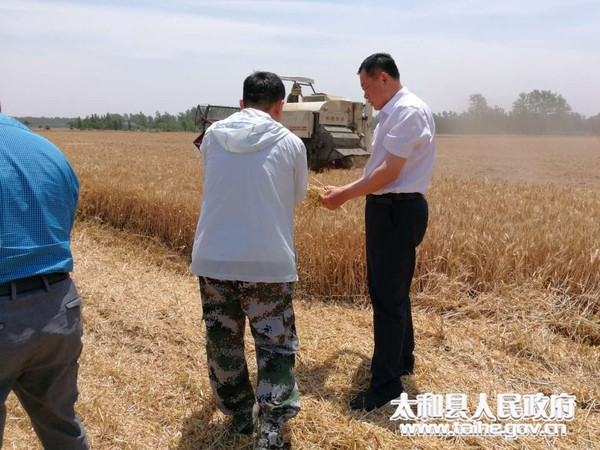 太和县人大常委会副主任陆凤杰到桑营镇督导