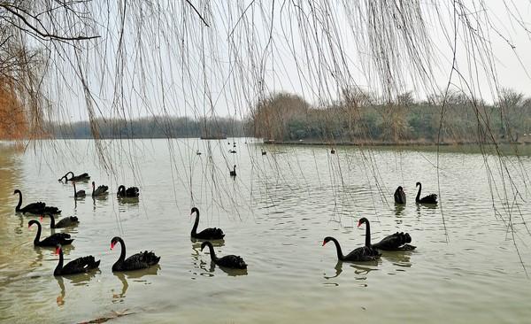 刘飞+天鹅湖畔2.jpg