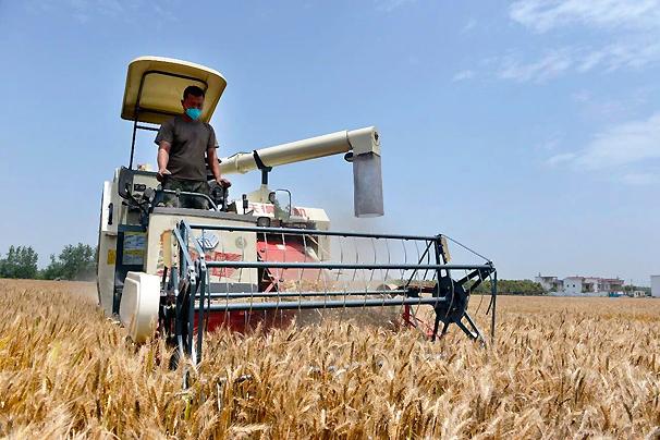 全市小麦陆续开机收割