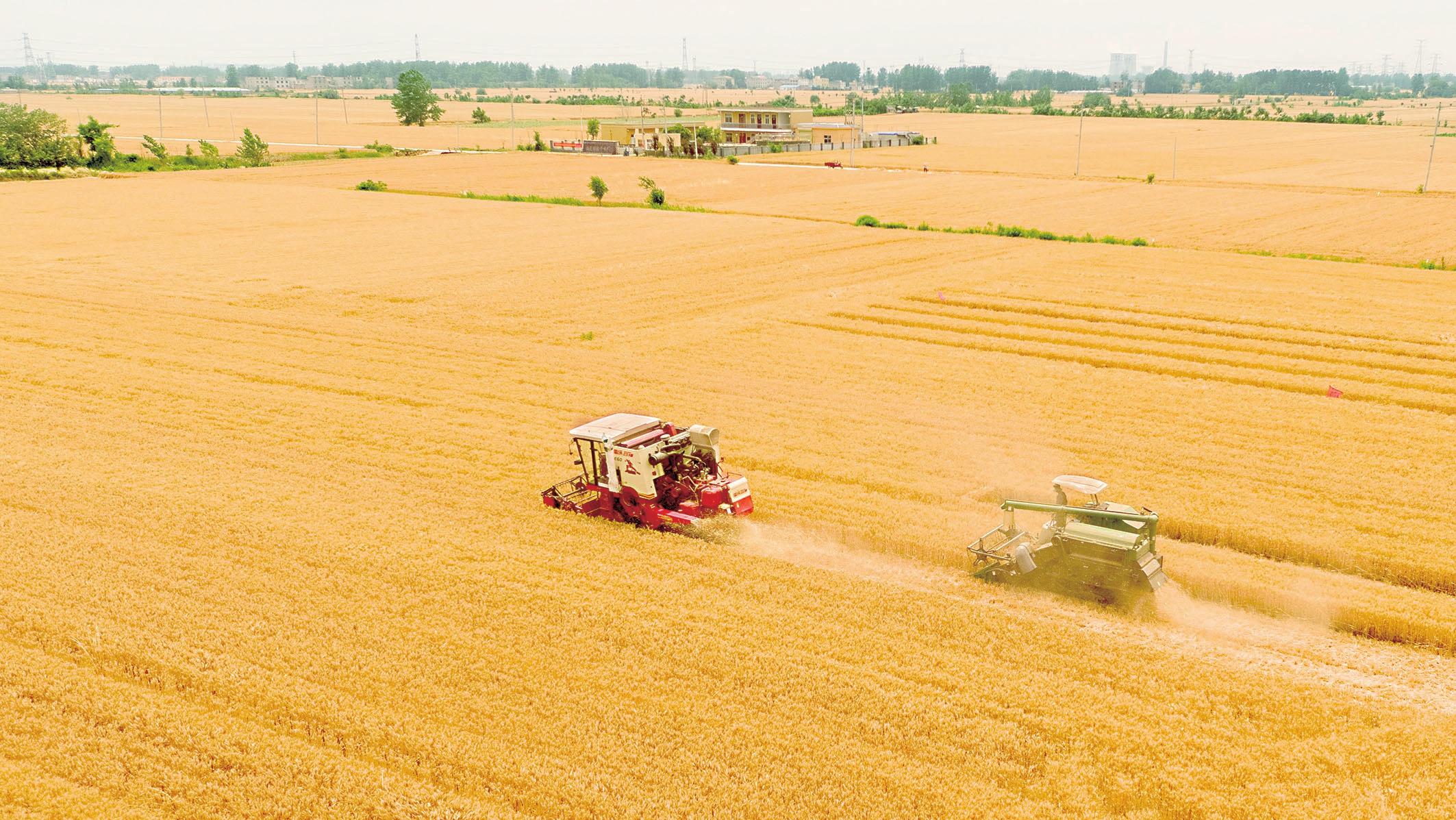 我市小麦开始大面积收割
