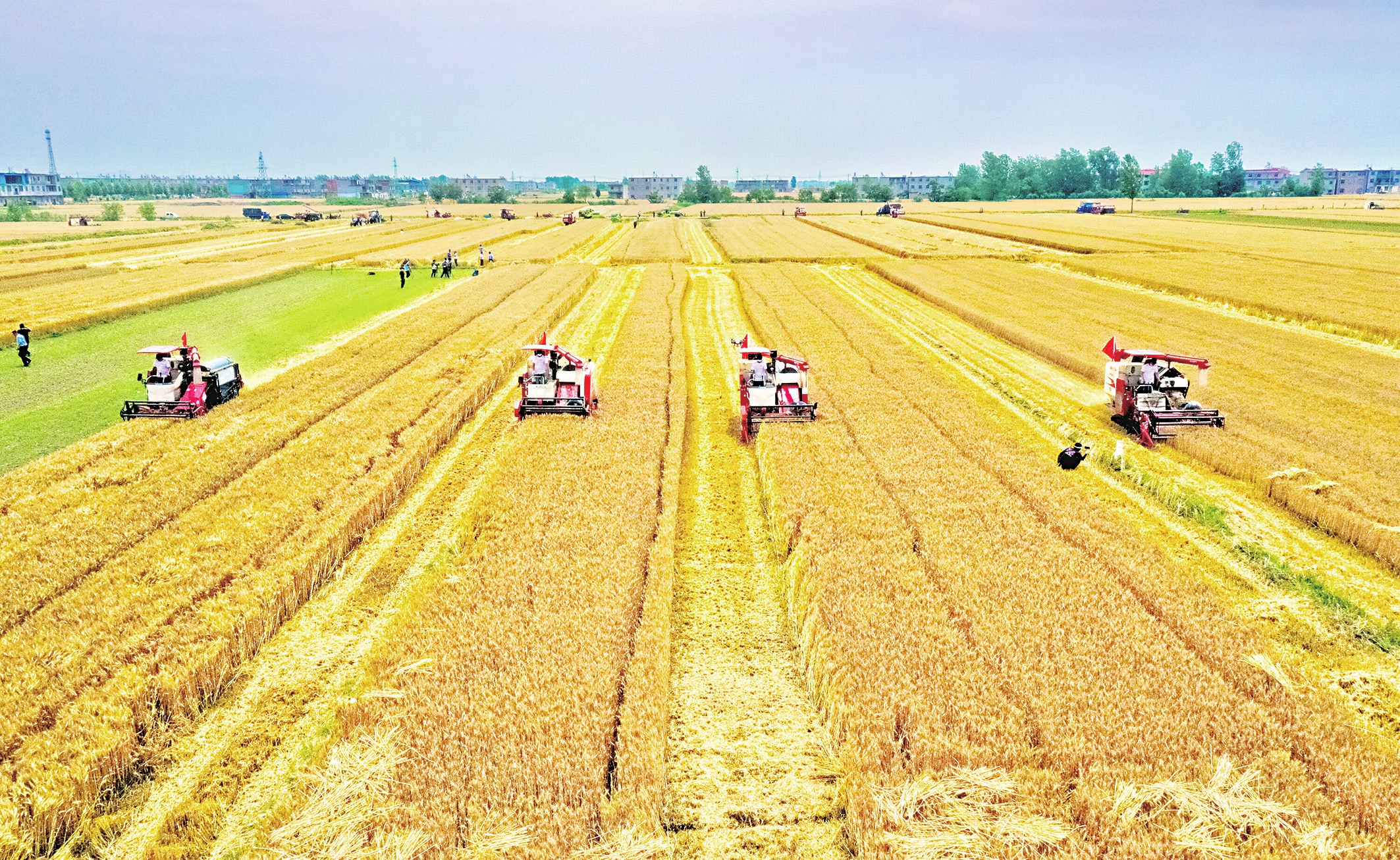 750萬畝小麥開鐮收割