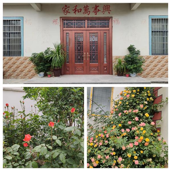 王集镇2.png