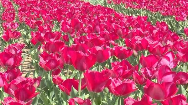 春光甚好,临泉的花开了!