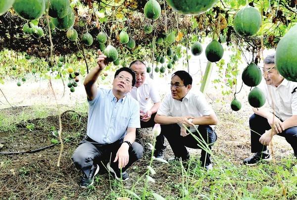 20200916杨省长在颍上.jpg